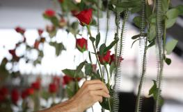 Flors de la Memòria